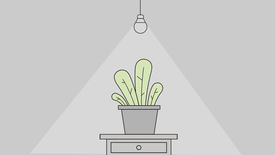 Image for post – GreenLight Plant Light Explainer
